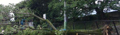 台風5号で右京区でも所々で被害が・・・